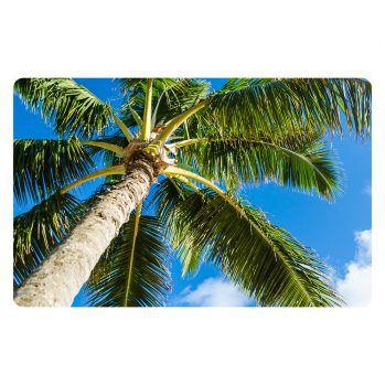 palm-1-11